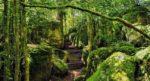 Labyrinthe vert Nebias